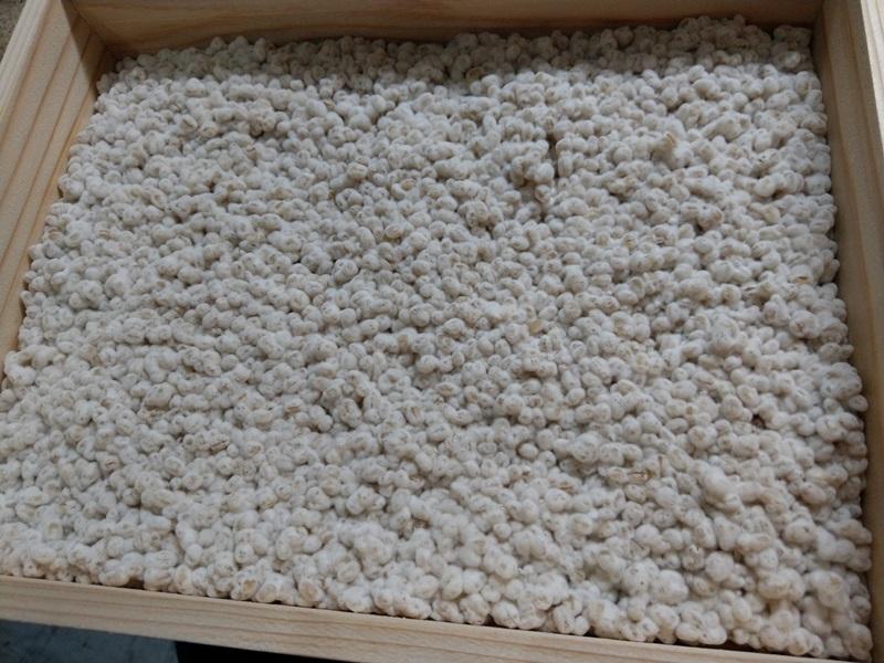 発酵調味料と麹の関係とは・・・?『続・箱の中身はなんじゃろな?』